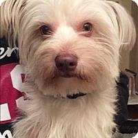 Adopt A Pet :: Camden - Encino, CA