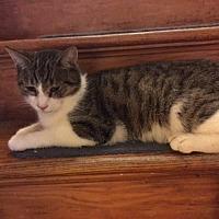 Adopt A Pet :: Ivan - Delmont, PA