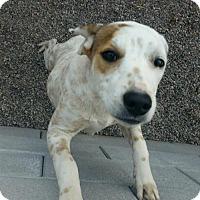 Adopt A Pet :: Jiminy - Mesa, AZ