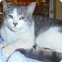 Adopt A Pet :: Lincoln-ADOPTED - Livonia, MI