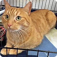 Adopt A Pet :: Samantha - Oakland, CA