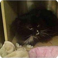 Adopt A Pet :: Groucho - Greenville, SC