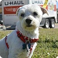 Adopt A Pet :: Sebastian Bach - Austin, TX
