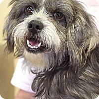 Adopt A Pet :: Henry - Marietta, GA