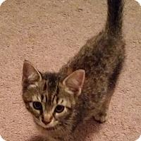 Adopt A Pet :: Ginger - Raritan, NJ