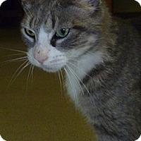 Adopt A Pet :: Mimi - Hamburg, NY