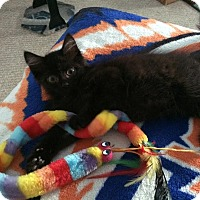 Adopt A Pet :: Tuna - East Brunswick, NJ