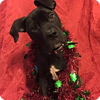 Adopt A Pet :: Mellow - Long Beach, NY