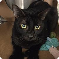 Adopt A Pet :: Monet - Hallandale, FL
