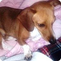 Adopt A Pet :: Fancy Felucia - Houston, TX
