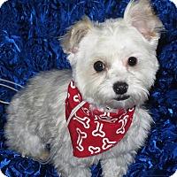 Adopt A Pet :: Freckles - San Diego, CA
