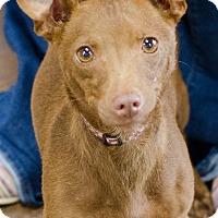Adopt A Pet :: Winnie - Arlington, TN