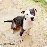 Adopt A Pet :: Marjorie - Dallas, TX