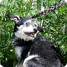Adopt A Pet :: Mama Dog