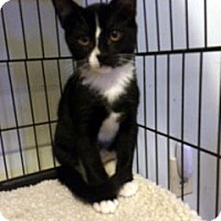 Adopt A Pet :: Billy - Overland Park, KS