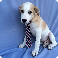 Adopt A Pet :: Clark Kent - East Sparta, OH