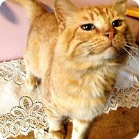 Adopt A Pet :: Steve - Washburn, WI