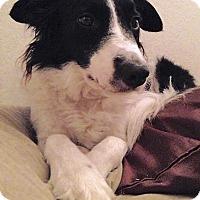 Adopt A Pet :: DHARMA - San Pedro, CA