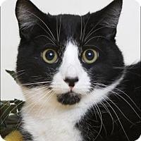 Adopt A Pet :: Nemo - Flagstaff, AZ