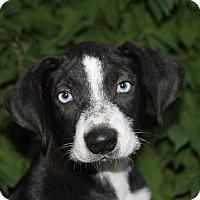 Adopt A Pet :: Lisbon - Joliet, IL
