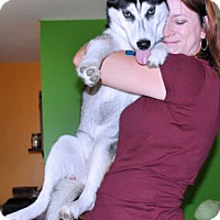 Siberian Husky Dog for adoption in Bowling Green, Virginia - Mary Lou