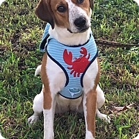 Adopt A Pet :: Eva - Homestead, FL
