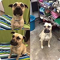 Adopt A Pet :: Buster - Bryan, OH