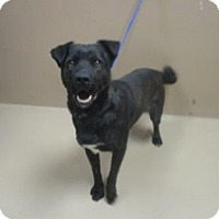 Adopt A Pet :: BUDDY - Reno, NV