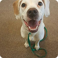 Adopt A Pet :: Baylee - West Allis, WI