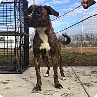 Adopt A Pet :: Faelynn - Paducah, KY