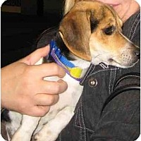 Adopt A Pet :: Houdini - Portland, OR