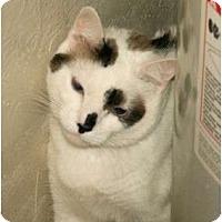 Adopt A Pet :: Patches - Scottsdale, AZ