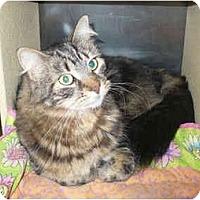 Adopt A Pet :: Louise - Colmar, PA