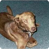 Adopt A Pet :: Chestnut - Pasadena, CA