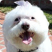 Adopt A Pet :: Gidget - La Costa, CA