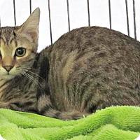 Adopt A Pet :: Bjorn - Seminole, FL