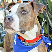 Adopt A Pet :: Kiko - Redondo Beach, CA