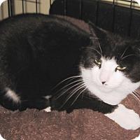 Adopt A Pet :: Harmony - Colmar, PA