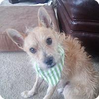 Adopt A Pet :: Fritz - Chicago, IL