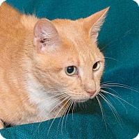 Adopt A Pet :: Eli - Elmwood Park, NJ