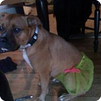 Adopt A Pet :: Bailey - Wilmington, NC