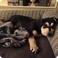 Adopt A Pet :: Henry - Pitt Meadows, BC