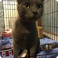 Adopt A Pet :: Moonstone - Trevose, PA