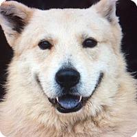 Adopt A Pet :: SCHMOLDT VON SENTA - Los Angeles, CA