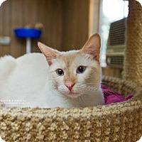Adopt A Pet :: Sonny - Parlier, CA