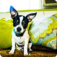 Adopt A Pet :: Oliver - Eugene, OR