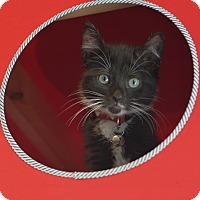 Adopt A Pet :: Rain - Brooklyn, NY