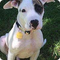Adopt A Pet :: Brody - Navarre, FL
