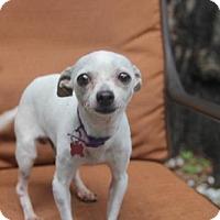 Adopt A Pet :: Sammy - tampa, FL