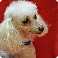 Adopt A Pet :: POLLY - Elk River, MN